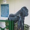 134_Tacugama Chimp Sanctuary