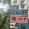 126_Tacugama Chimp Sanctuary