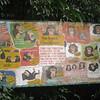 131_Tacugama Chimp Sanctuary