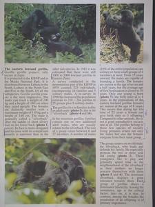 039_Parc National de Kahuzi-Biega