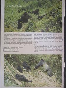 038_Parc National de Kahuzi-Biega