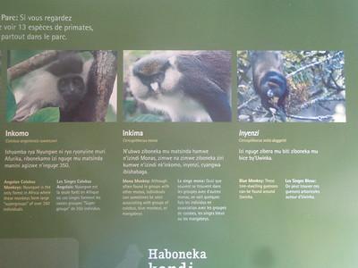 021_Nyungwe National Park