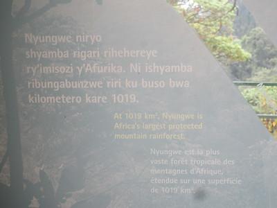 035_Nyungwe National Park