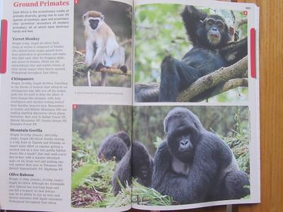 016_Nyungwe National Park