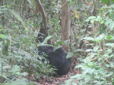 023_Nyungwe National Park  Chimpanzee