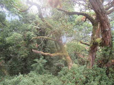040_Nyungwe National Park