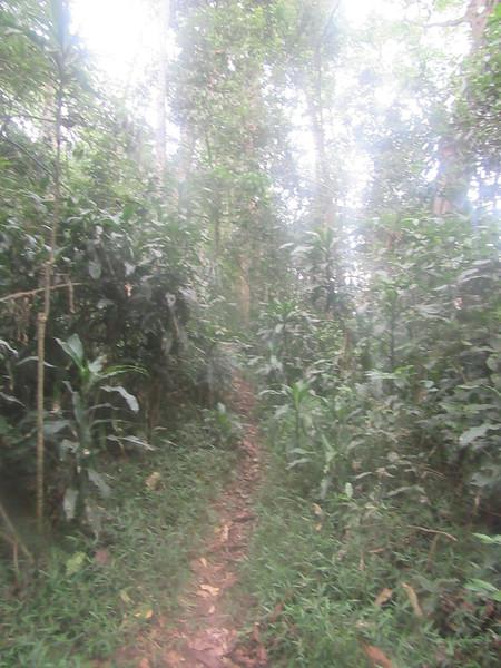 018_Nyungwe National Park