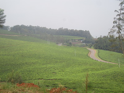 026_Rusizi  Tea Fields
