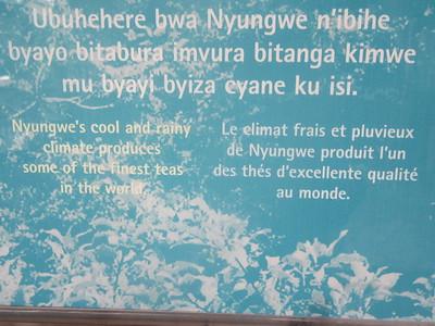 036_Nyungwe National Park