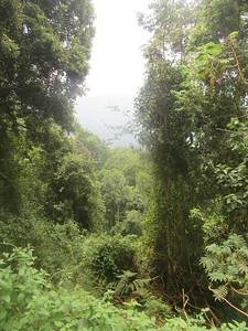041_Nyungwe National Park