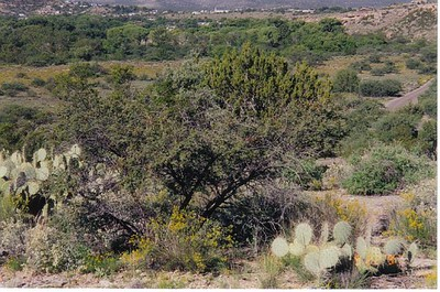 17_Desert_entre_le_Gr_Canyon_et_Phoenix
