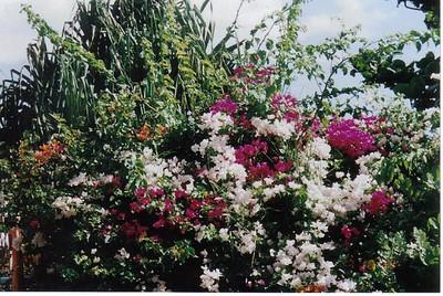 20_Maui_Flowers
