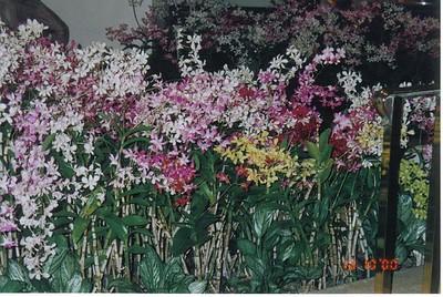 31_Oahu_Flowers