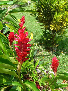 035_Belize_Verdant_Tropical_beauty