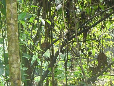 017_Rainforest