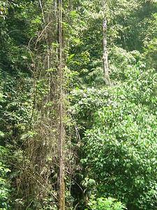 029_Rainforest
