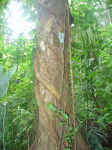 012_Rainforest