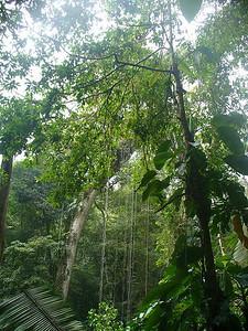 013_Rainforest