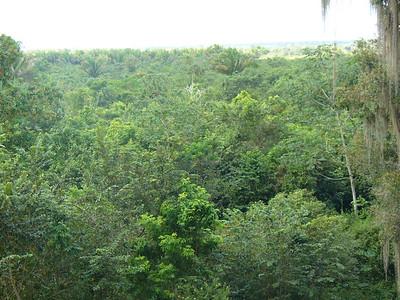 024_Chacchoben_Rainforest