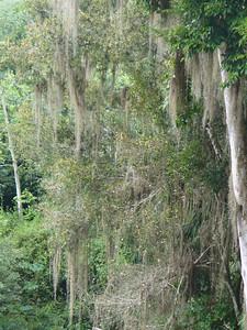 025_Chacchoben_Rainforest