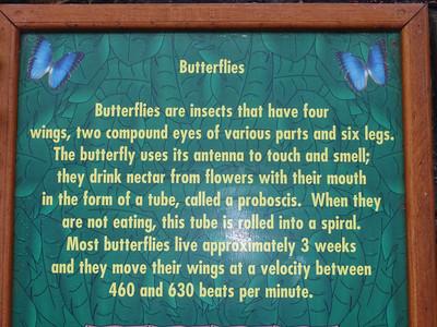 018_La Paz Waterfall Gardens  Butterflies