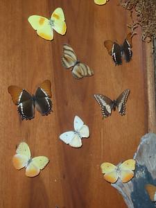 017_La Paz Waterfall Gardens  Butterflies