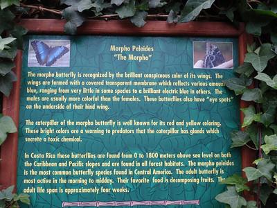 020_La Paz Waterfall Gardens  Butterflies