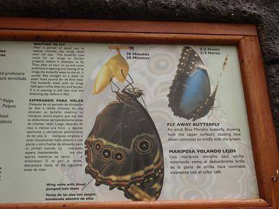 033_La Paz Waterfall Gardens  Butterflies