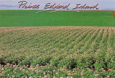 009_Potato blossoms  Rich farming heritage of PEI