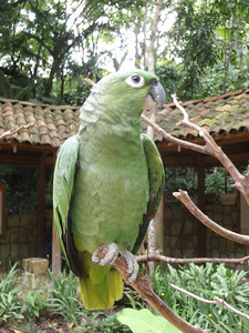 020  Copan  Macaw Mountain  The Aviary