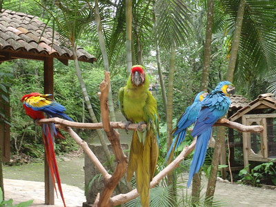 019  Copan  Macaw Mountain  The Aviary