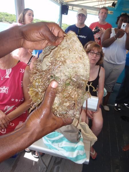 024_Great Stirrup Cay  Marine Life Encounter Eco Boat Tour