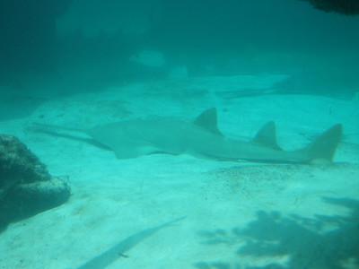 069_Nassau  Atlantis  Predator Tunnel