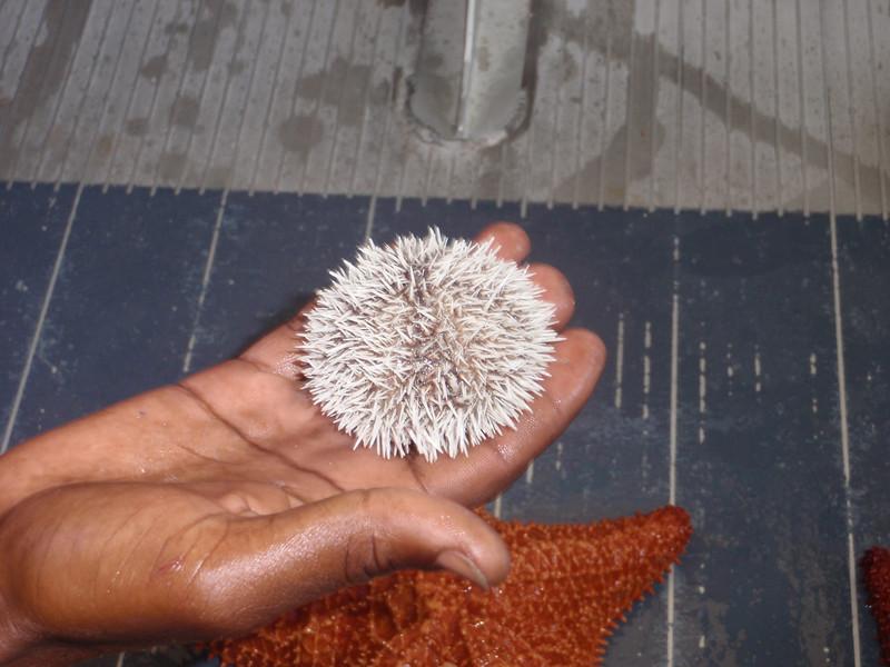 022_Great Stirrup Cay  Marine Life Encounter Eco Boat Tour