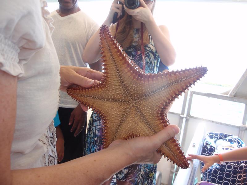 020_Great Stirrup Cay  Marine Life Encounter Eco Boat Tour