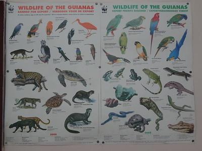006_Wildlife of the Guianas