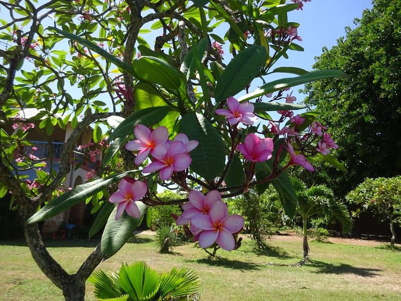 140_L'Ile Royale  Fleurs Tropicales
