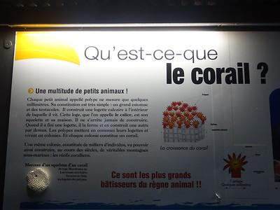 069_Gosier  Aquarium de la Guadeloupe