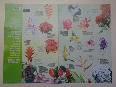 017_Martinique  Les Fleurs