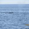 390_Tadoussac  Croisière aux Baleines  Gros Bateau