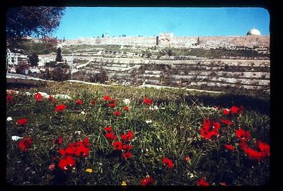 26_Jerusalem_La_Port_Doree