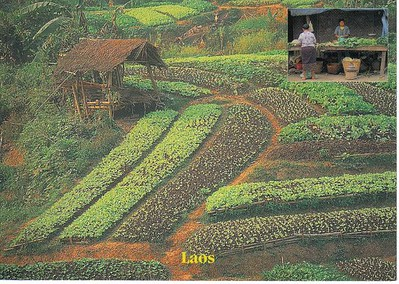 19_Luang_Pradang_Vegetable_Cultivation