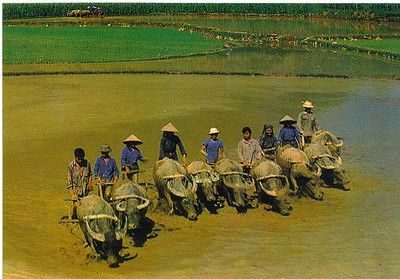 03_Daily_Life_Collective_Field_Ploughing_Hoa_Binh