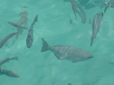 26_Sun_Island_poissons