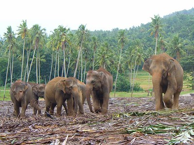 014_Elephant_Orphanage_pas_de_cloture