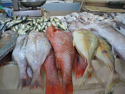 024_Kuwait_City_The_Sharq_Souq_Fish_Market