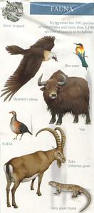033_Kyrgyzstan, Fauna