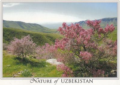 007_Nature of Uzbekistan