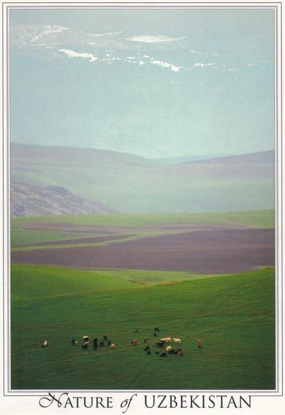 008_Nature of Uzbekistan