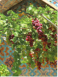 023_Fergana Valley  The most fertile part of Central Asia